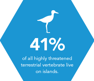 41% of all highly threatened terrestrial vertebrate live in islands.